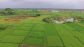 sulawesi : beautiful Aerialdrone view of rice paddy fields in the slawi city, with green nature scenery side by side with the Ex rock mining area, in tegal, central jawa, indonesia. beautyful scenery from the sky