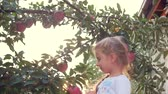 app : Pretty little girl picks a big red Apple from a tree, on a beautiful sky background at sunset. Stock Footage