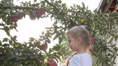 dziecko jedzenie : Pretty little girl picks a big red Apple from a tree, on a beautiful sky background at sunset. Wideo