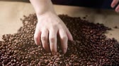 juta : Coffee beans. Hands scattered coffee beans. Womens hands touch coffee beans. Quality of grain roasted in coffee fly. 4k.