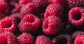 mirtilo : Close Up Berry. Fresh, Juicy Raspberry Background, Ripe. Macro Red Raspberries Fruit. Fresh Raspberry Fruits As Food Dackground. Healthy Food Organic Nutrition.