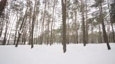 glides : Camera moves among snow-covered trees during snowfall in forest at winter day. Stock Footage