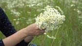 cięzarna : Happy pregnant woman making camomile wreath. Wideo