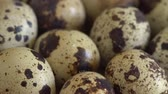 Uncooked quail eggs in pack. Rotating and closeup. Nobody Stock Footage
