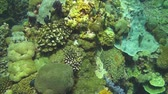 pairar : Flying over the coral reef of the Bali Sea