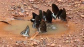 muster retro : closeup beautiful butterfly holding on thr floor in day time after rain Videos