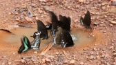 motif retro : closeup beautiful butterfly holding on thr floor in day time after rain Vidéos Libres De Droits