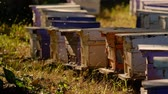 bijenkorf : Bees fly in and out of the beekeeping box