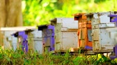 ファームハウス : Bees fly in and out of the beekeeping box.
