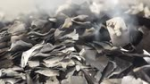 остатки : Close up shot of some burnt pieces of paper and smoke.