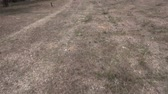 deserted : Walking slowly in a fallow field. The clip includes its original sound. Stock Footage