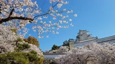 держать : Cherry blossom and the Himeji castle in Japan