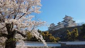 ЮНЕСКО : Cherry blossom and the Himeji castle in Japan