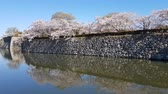 history : Cherry blossom and the Himeji castle in Japan
