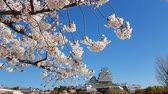 conservar : Cherry blossom and the Himeji castle in Japan