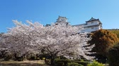 old world : Cherry blossom and the Himeji castle in Japan