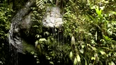 liána : Water dripping off wet rocks in cloud forest in Ecuador