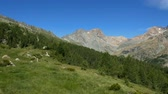 purê : Alpine landscape with high mountains and pasture in summer in Valmalenco, northern Italy