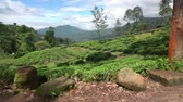 зелень : Fields of Nuwara Eliya