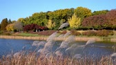 Autumn forest. Lake. Autumn Landscape. Real time. Olympic Park in Seoul, South Korea Stock Footage