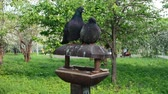 pigeon nest : Doves kissing while sitting on a Bird House Stock Footage