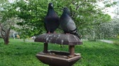 cami : Doves kissing while sitting on a Bird House Stok Video