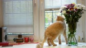 ленивый : pets and animals concept - cat on window Стоковые видеозаписи
