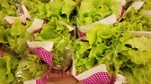 red cabbage : Green salad salad soldier in the supermarket stock footage video Stock Footage