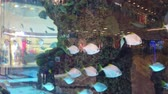 spinato : An aquarium in shopping center. A big aquarium in evening shopping center. Aquarium with fish in the shopping center ..