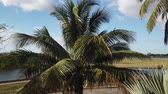 cubano : Varadero Palm Beach Ocean Cuba. Varadero, Cuba sunny beach palm trees. Tropical travel scene.