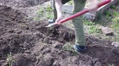 backyard : Farmer plant digging beds for crops. Plant potatoes in the ground in spring.