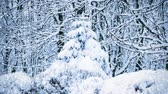 сугроб : Spruce trees covered in snow and falling snowflakes