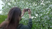 Close up - Female takes photos of blooming lilac using smartphone in beautiful spring garden.