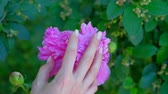 womens hand gently touches the peony flower