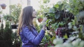 koku : Young caucasian woman buying flowers at a garden shop Stok Video