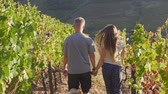 viticoltura : Back view of couple holding hands and walking at sunset through the vineyard Filmati Stock