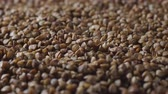 boekweit : Top view of fresh dry buckwheat rotation. Background, texture Stockvideo