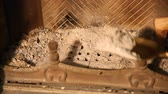 inventário : We clean fireplace from ashes with brass shovel. Cleaning the fireplace. Close up
