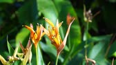 madeira : Close up of or bird of paradise flower with ant