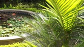 com sombra : lush tropical garden with lotus pond