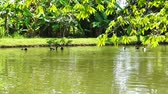 willamette : Ducks Swimming in lake with lush green nature