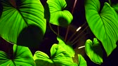 backlit : Colocasia leaves with backlit at night showing beautiful texture Stock Footage
