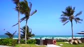 surfe : Windy beach and coconut palm trees with kite board sport playing in the background ocean