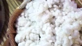 ротанг : Cotton being picked from field gather together before production