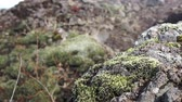 shallow depth field : Moss volcano Iceland landscape slow motion video