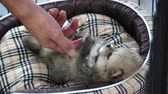 приятель : Cute sleepy puppy in bed with owner hand play 4k