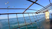 travel cage : Shark Cage Diving View On And Underwater South Africa Stock Footage