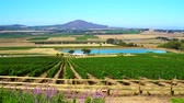 South Africa vineyard winery farm business landscape view
