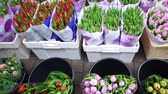 тюльпаны : Tulip flowers selling in Amsterdam market