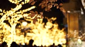 стол : Japanese Christmas night illumination tree romantic view sight
